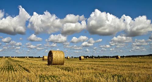 [フリー画像] 自然・風景, 田畑・農場, スウェーデン, 201110030700