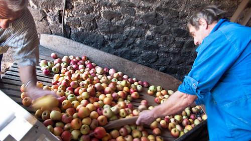 Squeezing apples
