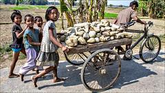 Helping Father • Hatigisha (Henk oochappan) Tags: westbengal northindia siliguri oochappan lifeinindia img0553f hatigisha