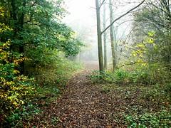 MISTY MORNING IN BIRCHWOOD.. (ronsaunders47) Tags: trees mist warrington cheshire walkways paths birchwood lanes