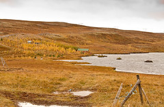 Waterpass (joningic) Tags: autumn trees house fall nature yellow iceland hnavatnsssla vatnsskar
