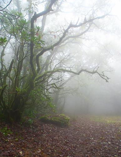 niebla en el bosque by carlos_d700
