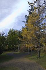 Trjástígur í Hellisgerði (helga 105) Tags: trees yellow iceland aline tré gulur canond350 helga105 beinröð