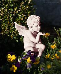 Was mag er wohl gerade weg gepustet haben (H.B.Koch) Tags: autumn sculpture friedhof sun cemetery statue angel germany deutschland urlaub herbst skulptur putte stadt engel sonne schwarzwald blackforest schluchsee putto stiefmütterchen gegenstand schluchseeort hbkoch