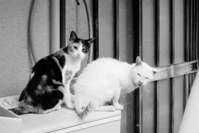 Today's Cat@2011-10-07