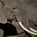 Dammapada - El Elefante (320-333)