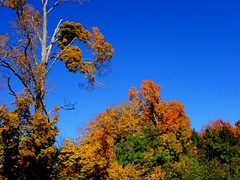 An October Afternoon (Maureclaire) Tags: autumn autumnfoliage trees colorful herbst herfst el otoo  autunno haust  outono hst syksy autumncolor podzim hsten westernma musim sonbahar jesen montaguema efterr sz lautomne  topshots  gugur jesieni   jeseni natureselegantshots mygearandme ringexcellence blinkagain