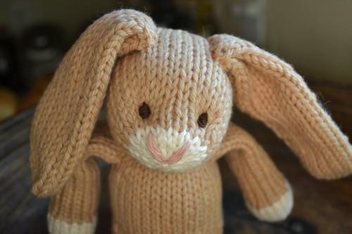 Malt bunny (2)