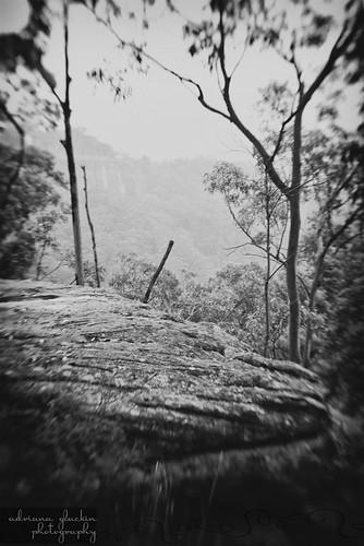 mist & fog in springtime_5
