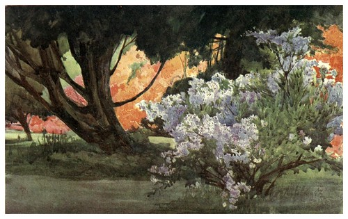 030-Azaleas- Flower grouping in English, Scotch & Irish gardens 1907- Margaret Waterfield