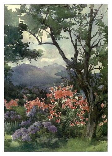 023-Lirios tigre y margaritas en Escocia- Flower grouping in English, Scotch & Irish gardens 1907- Margaret Waterfield