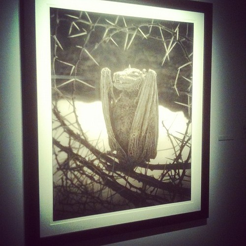 calcified bat. nick brandt at #fotografiska