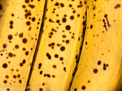 1000/612: 16 Oct 2011: Bananas by nmonckton