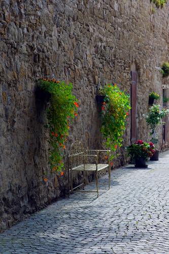 Blumenwand by Fotosilber