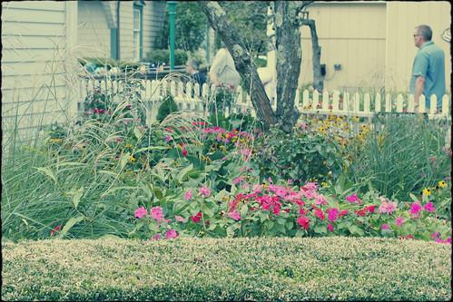 mystic flowers