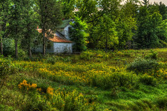 Goldenrod (bill.d) Tags: white house abandoned rural afternoon decay michigan unitedstatesofamerica goldenrod swingset hdr barrycounty photomatix viveza topazinfocus