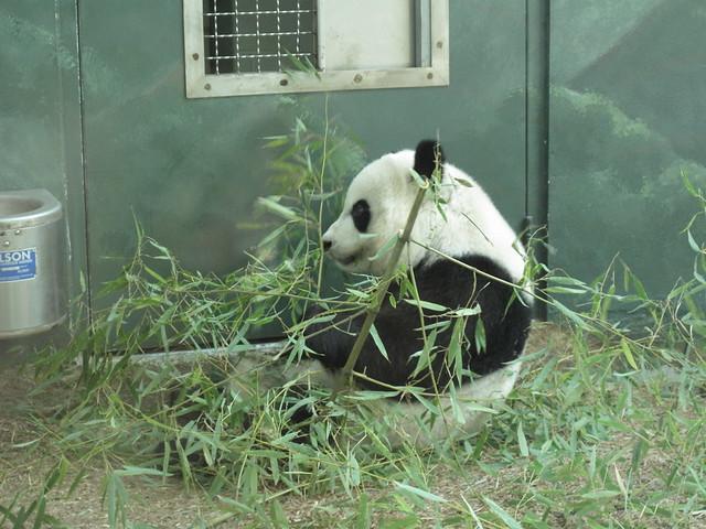 Zoo 0069