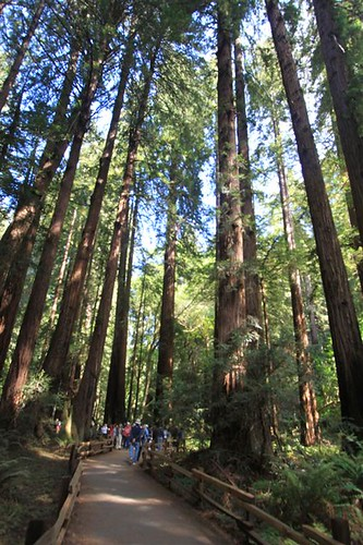Fresh air and enjoy the nature at Muir Woods, San Francisco