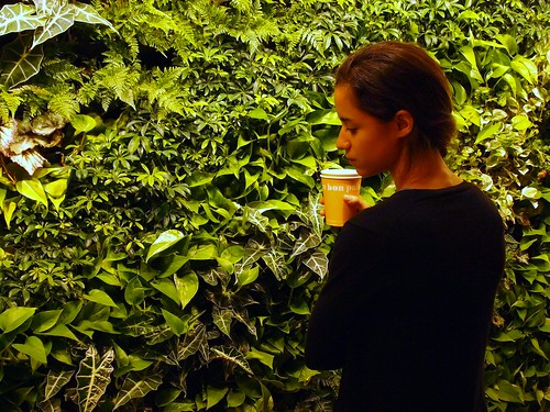 NRDC-DC's green wall (by: Matt Cohen, courtesy of NRDC)