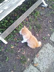 服部牧場にいたネコの写真