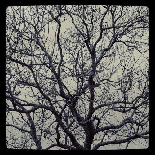 Wild trees!