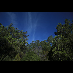 Nature Welcomes You! (VinothChandar) Tags: blue trees light sky india color green nature beautiful beauty clouds canon landscape photography landscapes photo colorful glow photos vibrant violet vivid tamilnadu ooty udhagamandalam sooc canoneos5dmarkii