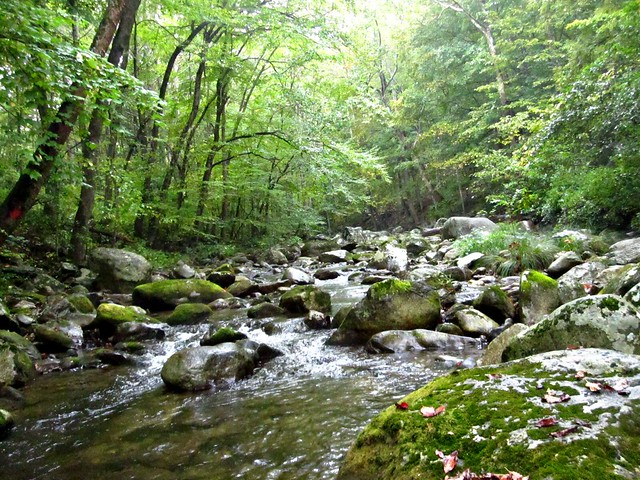 tyro river