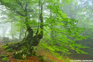 Behelainoz mozkor / Borrachos de niebla