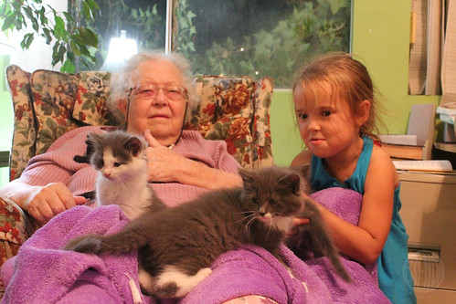 Gramma and kittens