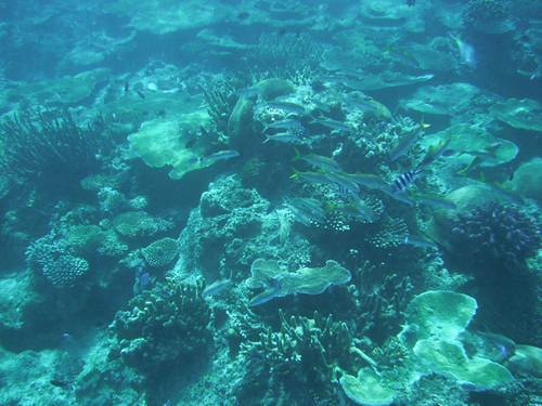 Navadra Reef
