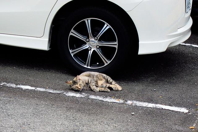 Today's Cat@2011-09-23