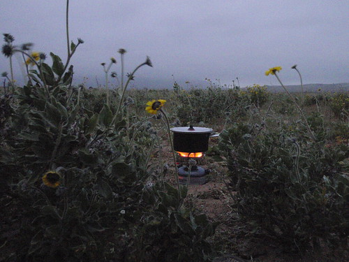 Coleman 533 petrol stove cooking dinner in Chilean desert, with flowers.