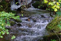 autumn leaves swept along (devonteg) Tags: leaves nikon september ferns exmoor mosses 2011 autumncolour d80 eastwater nikkor105mmf28gvrmicro