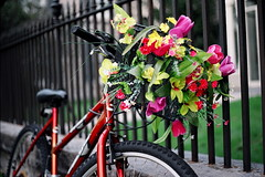 COLORFUL KINGSTON (La Branĉaro) Tags: flowers ontario canada film bike 35mm 1 colorful fuji dof basket bokeh olympus depthoffield kingston shallow om fakeflowers om1 800z pro800z 50mmf35macro customizedbike zuikomacro colorfulkingston customizedbasket
