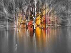 Autumn is Arriving Quickly (Stanley Zimny (Thank You for 16 Million views)) Tags: park autumn trees red lake reflection tree fall nature water colors leaves yellow automne catchycolors nude dead leaf colorful colours seasons natural zoom fallcolors autumncolors fourseasons autumnal colorexplosion 4seasons