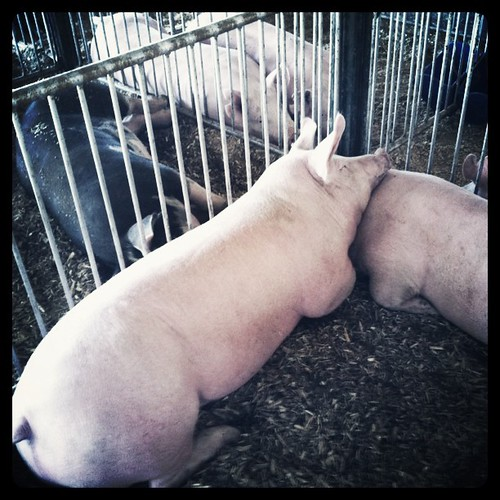 Swift County Fair 2011