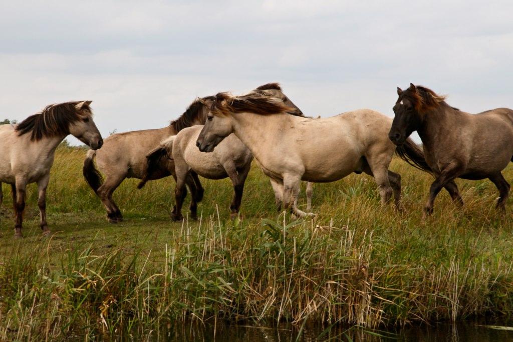 Wild horses 2