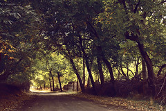 Autumn (seyed mostafa zamani) Tags: life road camera new autumn trees light color tree art fall love nature colors beautiful beauty look leaves canon way season photography death cool nice colorful asia branch iran arts azerbaijan smell dreams iranian نور پاييز lovly زندگي زيبا ايران درخت باغ رنگ nasim عشق طبيعت شهرستان هنر خاطره azarbayjan ايراني eos450d خزان خونه 450d برگ رنگارنگ marand شرقي مرند مفهومي مفهوم اذربايجان natvryalyst انتزاعي