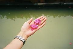 flower in hand (Bobi-home) Tags: flower film hands  hold  seize grasp