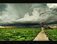 lotus fields and the approaching rain.. (PNike (Prashanth Naik..back after ages)) Tags: sky woman green colors girl lady clouds umbrella nikon ramp asia cambodia lotus fields siemreap strom rains d7000 pnike yahoo:yourpictures=landscape