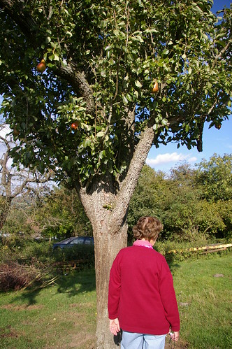farm orchard peartree fordcombe kentweald