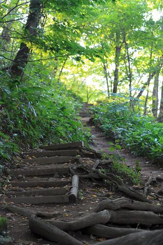 緩やかな登山道