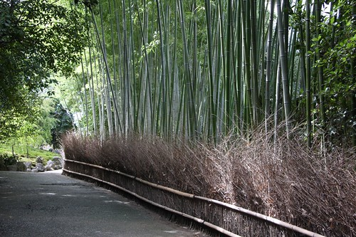 竹林の道 / Forest of bamboos