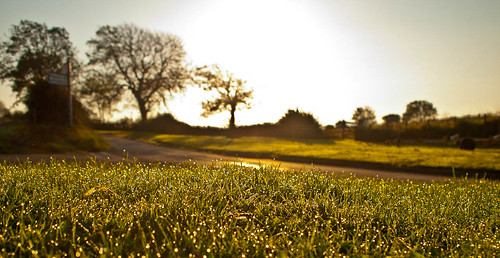 1000/576: 30 Sept 2011: Morning dew by nmonckton