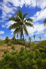 Lamu island - Kenya (Eric Lafforgue) Tags: africa island kenya culture unescoworldheritagesite afrika tradition lamu swahili afrique eastafrica qunia lafforgue  qunia    kea 127226   tradingroute a