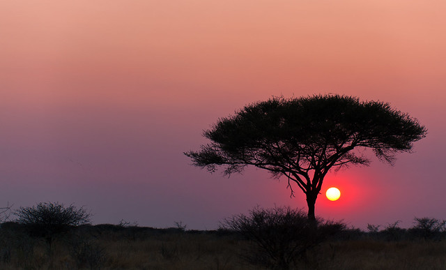 African cliché
