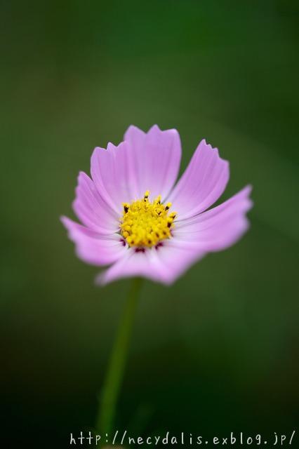 small cosmos...