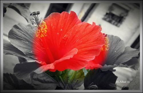 Flor by Miguel Allué Aguilar