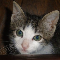 Gari (nuska2008) Tags: naturaleza cat flickr gatos ojosverdes animales mirada mascotas gatito olympusu1060s1060 nuska2008 nanebotas
