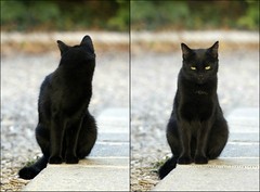 """You talkin' to me?"" (